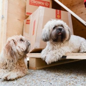 Moving with Pets Made Easy | Crown Relocations