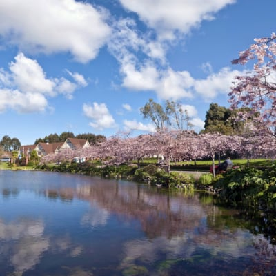 Destination Services - image of a lake with blossoms